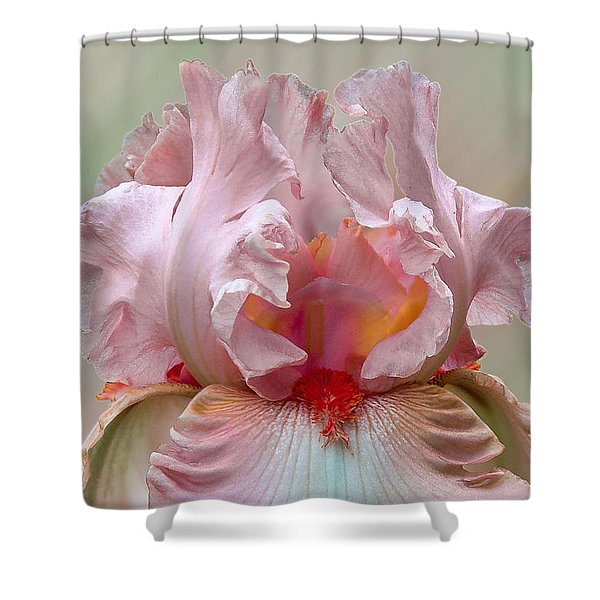 Pink Electrabrite Bearded Iris Shower Curtain