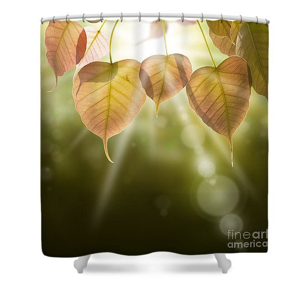 Pho Or Bodhi Shower Curtain