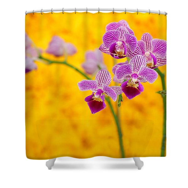 Purple Orchid-9 Shower Curtain