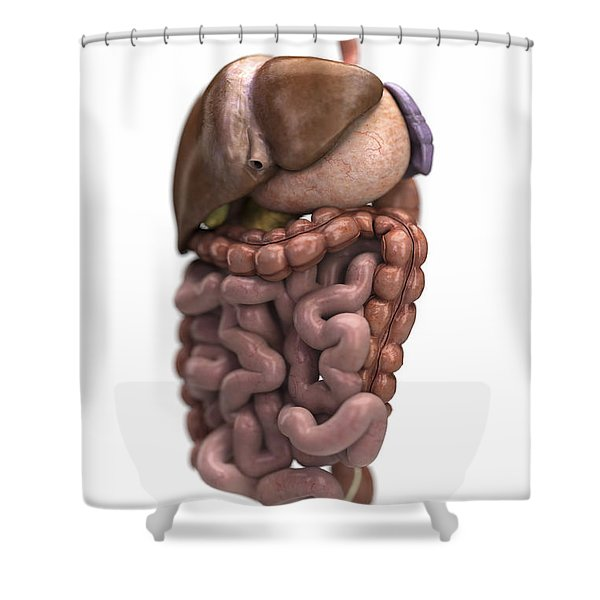 The Digestive System Shower Curtain