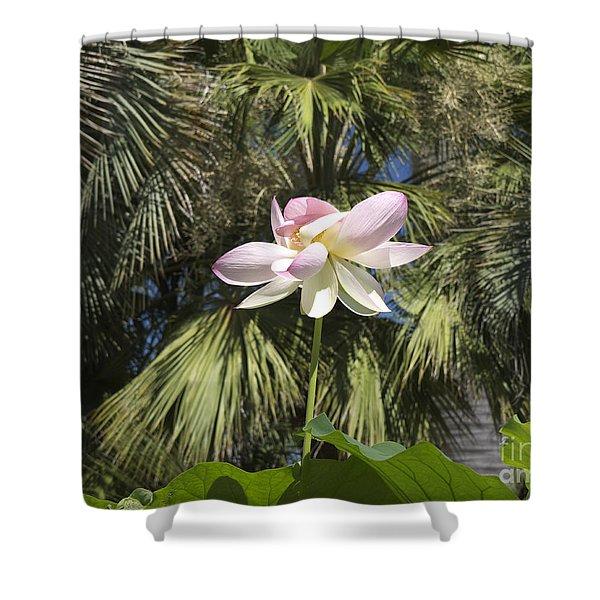 A Balmy Lotus Flower Shower Curtain