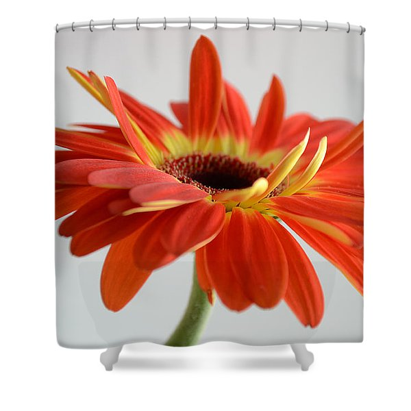 A Beautiful Dream Shower Curtain