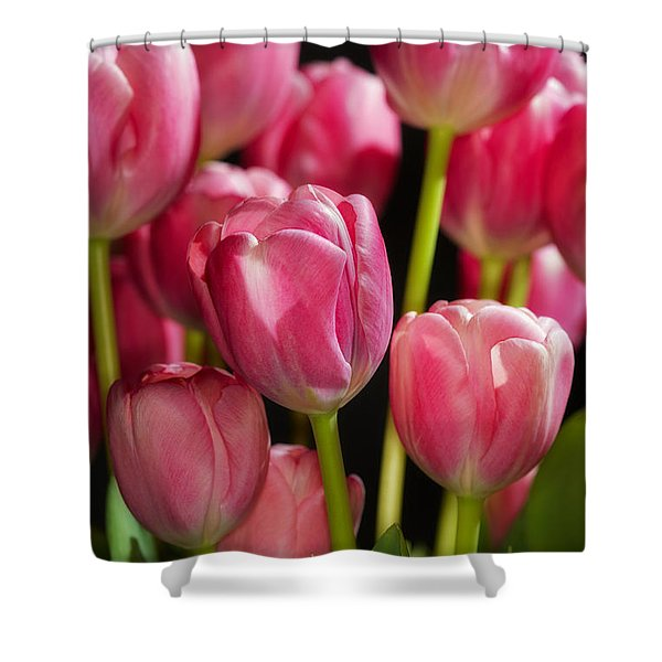A Bouquet Of Pink Tulips Shower Curtain