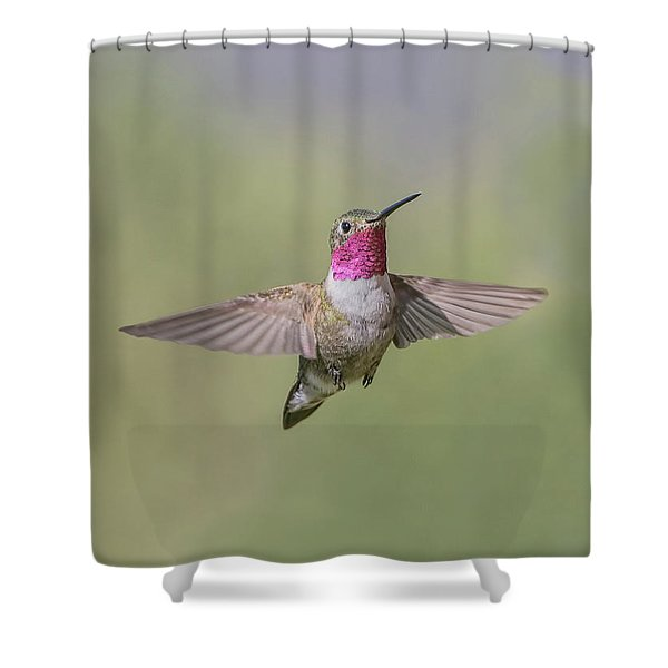 A Broad-tailed Hummingbird Hovers Shower Curtain