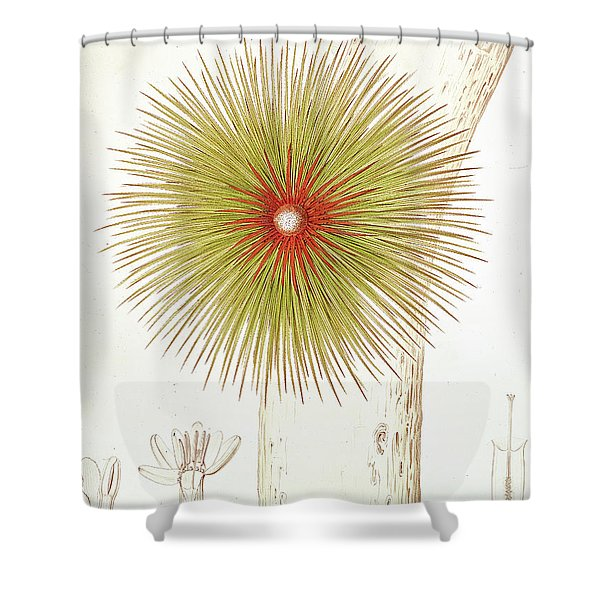 A Bromelia Found In The Andes Shower Curtain