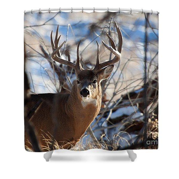 A Buck In The Bush Shower Curtain