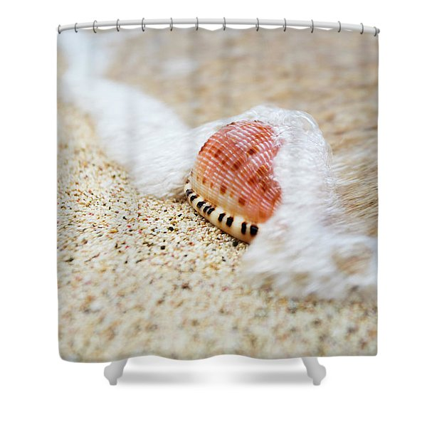 A Close Up Of A Cowry Shell Shower Curtain