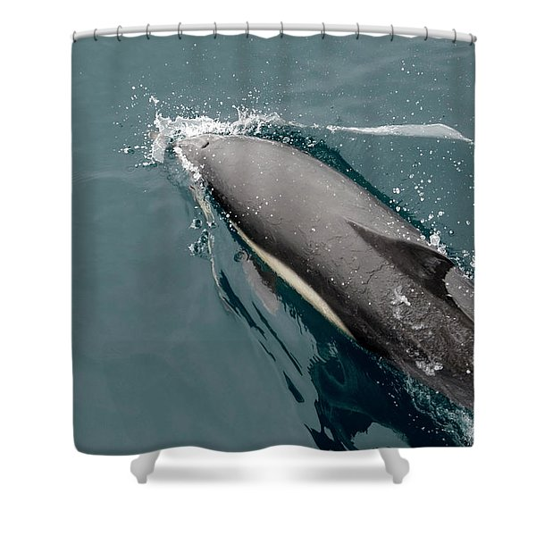 A Common Dolphin Off The Coast Of Santa Shower Curtain