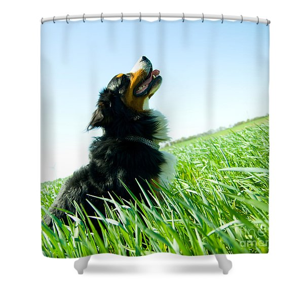 A Cute Dog On The Field Shower Curtain