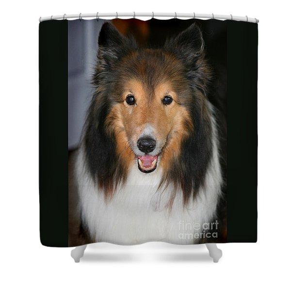 A Dog Named Beau Shower Curtain