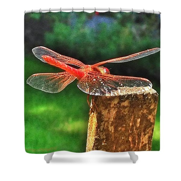 A Dragonfly Came By For A Visit Today! Shower Curtain