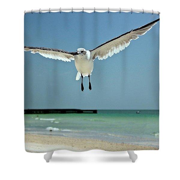 A Florida Gull Shower Curtain