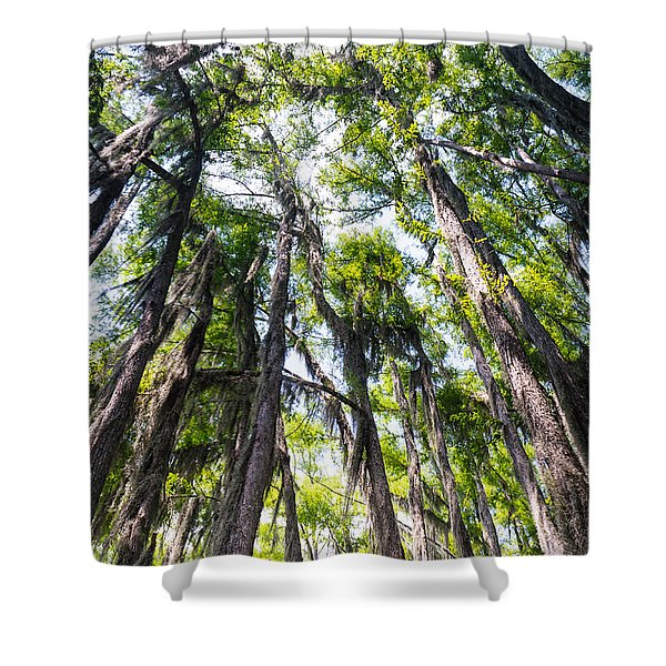 A Forest Of Bald Cypress Trees In The Caddo Lake Area Shower Curtain