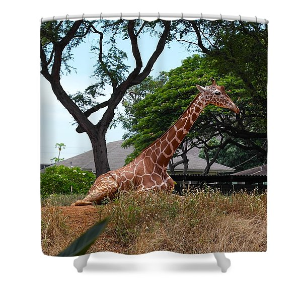 A Giraffe Rests In Honolulu Shower Curtain