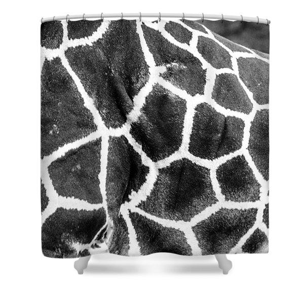 A Giraffe's Maze Shower Curtain