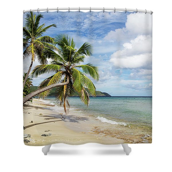 A Gorgeous Palm Tree Stretches Shower Curtain