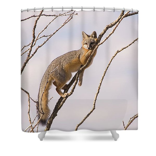 A Gray Fox In An Ocotillo Plant Looking Shower Curtain