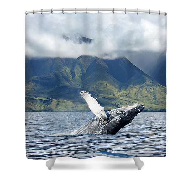 A Humpback Whale  Megaptera Shower Curtain
