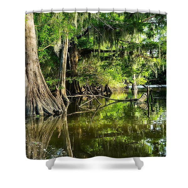 A Jungle Of Bald Cypress Trees Shower Curtain