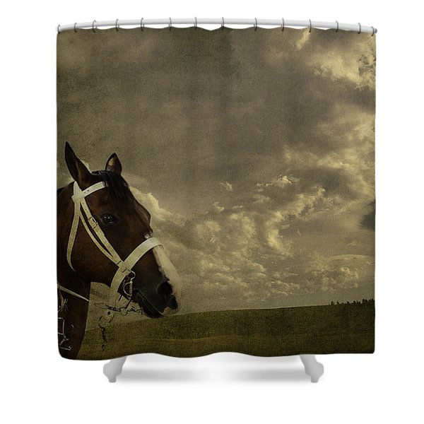 A Lovely Horse Shower Curtain