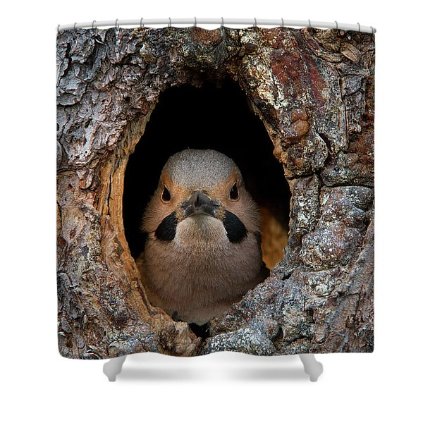 A Northern Flicker In The Hollow Shower Curtain