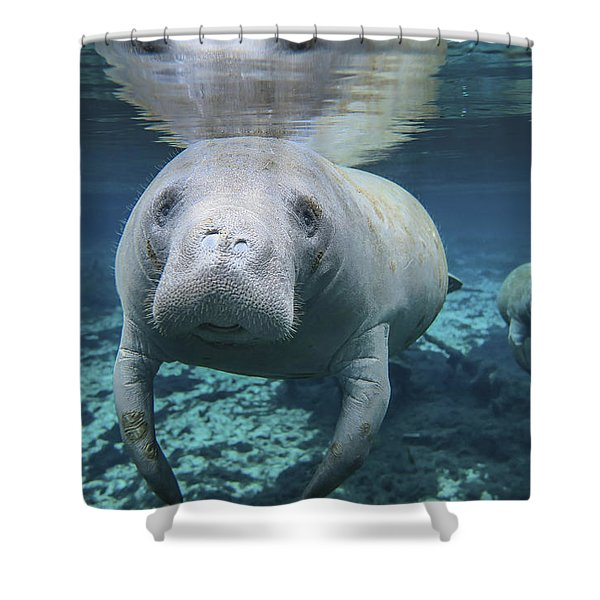A Pair Of Manatees Swimming In Fanning Shower Curtain