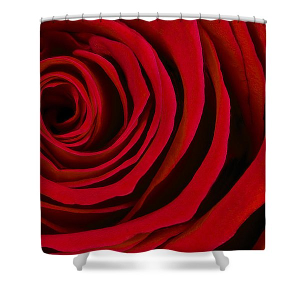 A Rose For Valentine's Day Shower Curtain