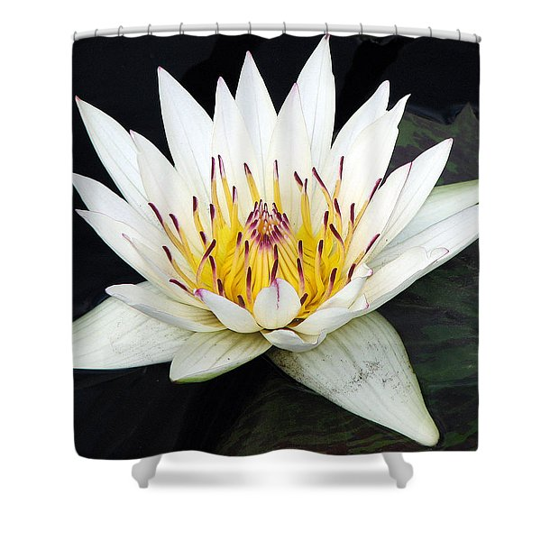 Botanical Beauty Shower Curtain