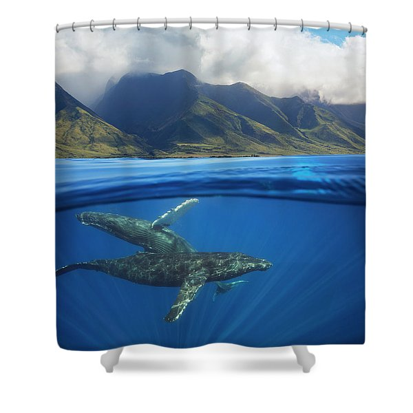 A Split Image Of A Pair Of Humpback Shower Curtain