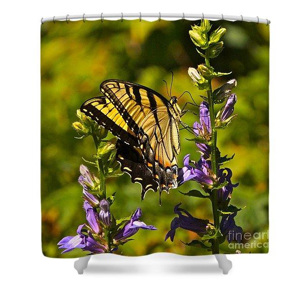 A Warm September Day In The Garden Shower Curtain
