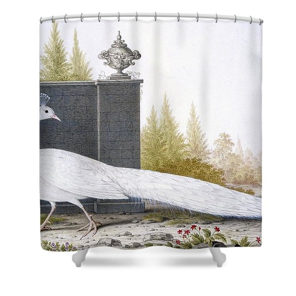 A White Peahen Shower Curtain
