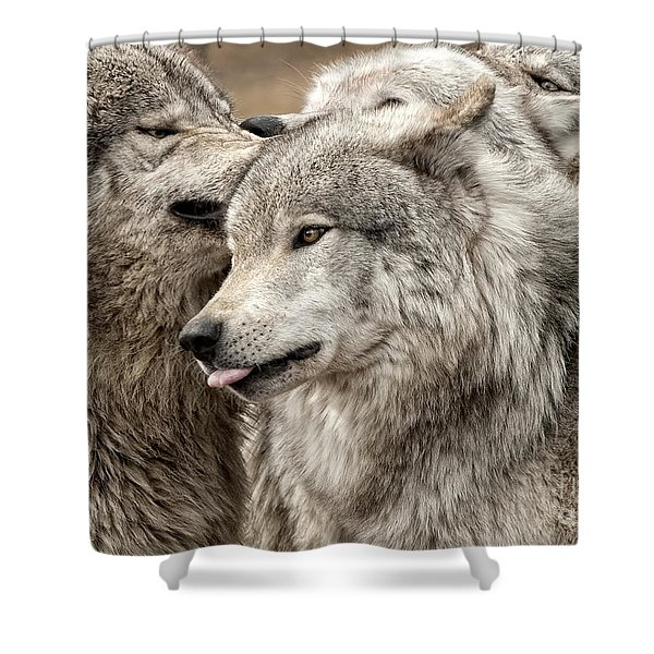 Adult Timber Wolf Shower Curtain