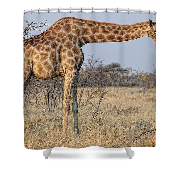 Africa, Namibia, Kaokoland, Namib Shower Curtain