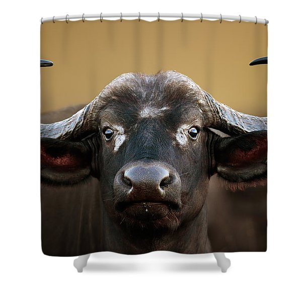 African Buffalo Cow Portrait Shower Curtain
