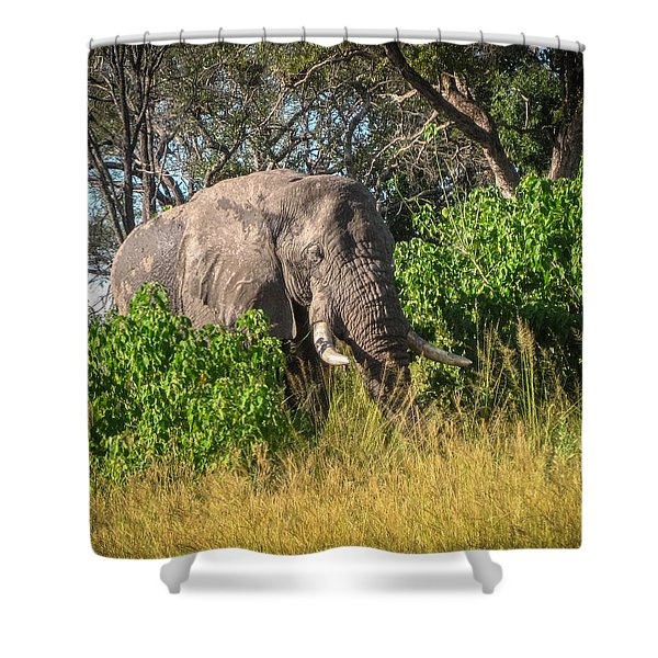 African Bush Elephant Shower Curtain