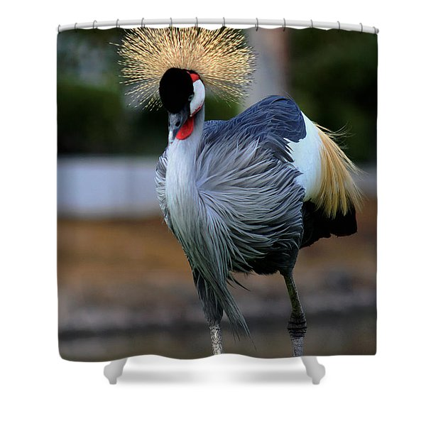 African Crowned Crane Running Shower Curtain