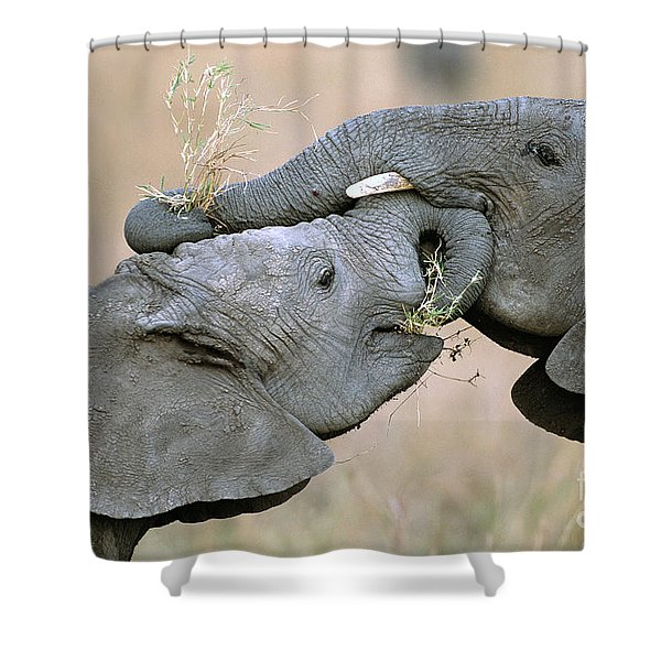 African Elephant Calves Playing  Shower Curtain