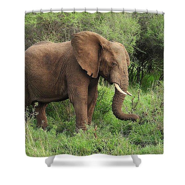 African Elephant Grazing Serengeti Shower Curtain