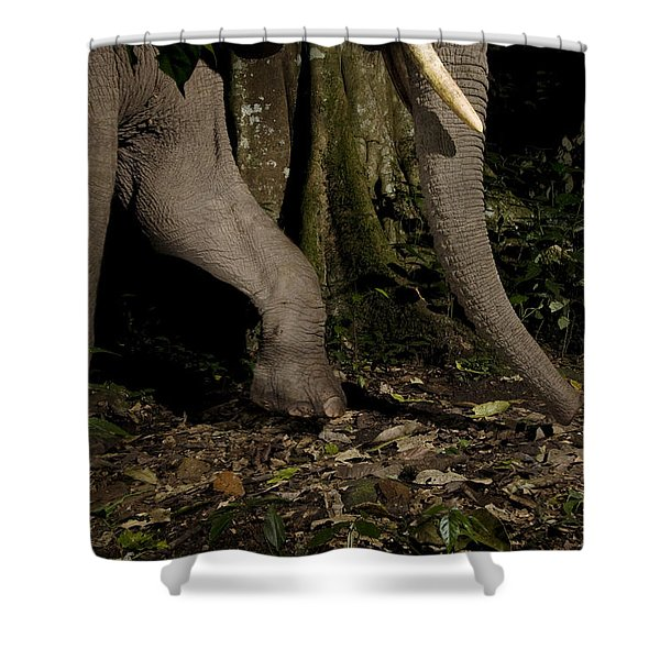 African Elephant Night Walk Kibale Np Shower Curtain