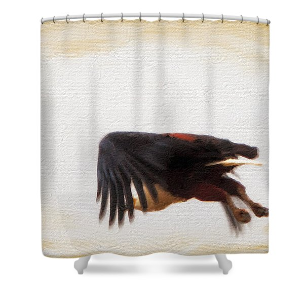 Shower Curtain featuring the photograph African Fish Eagle In Fligh by Perla Copernik