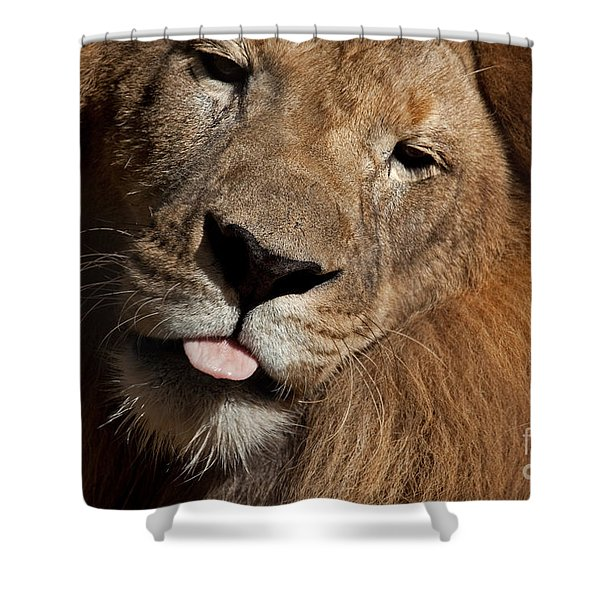 African Lion Shower Curtain