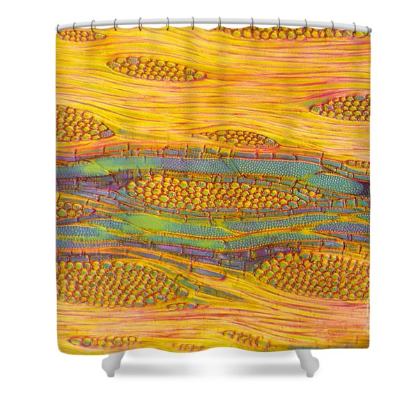 Ailanthus Tree, Wood Section Shower Curtain