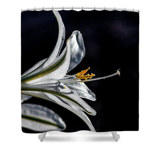 Ajo Lily Close Up Shower Curtain