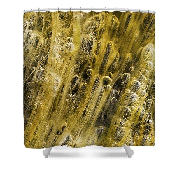 Algae Bubbles In Creek Shower Curtain