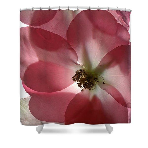 Alice Rose Trio Shower Curtain