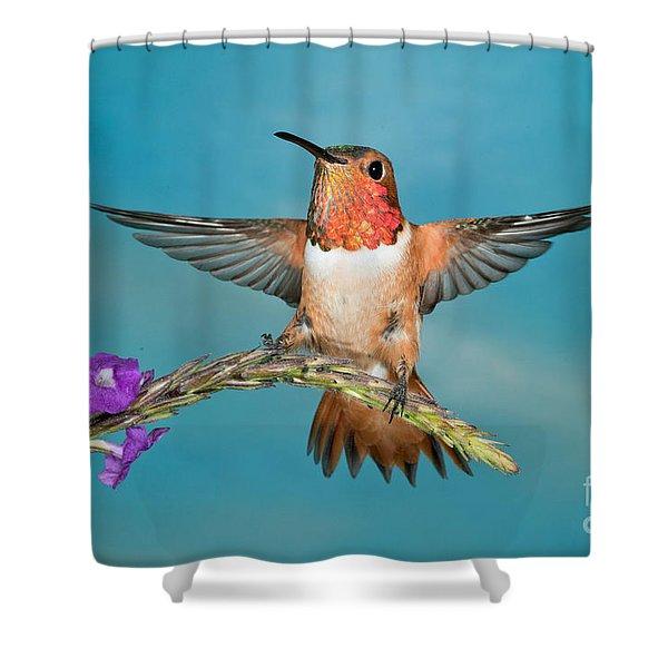 Allens Hummingbird Male Shower Curtain