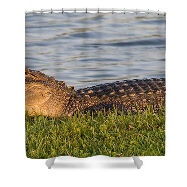 Alligator Smile Shower Curtain