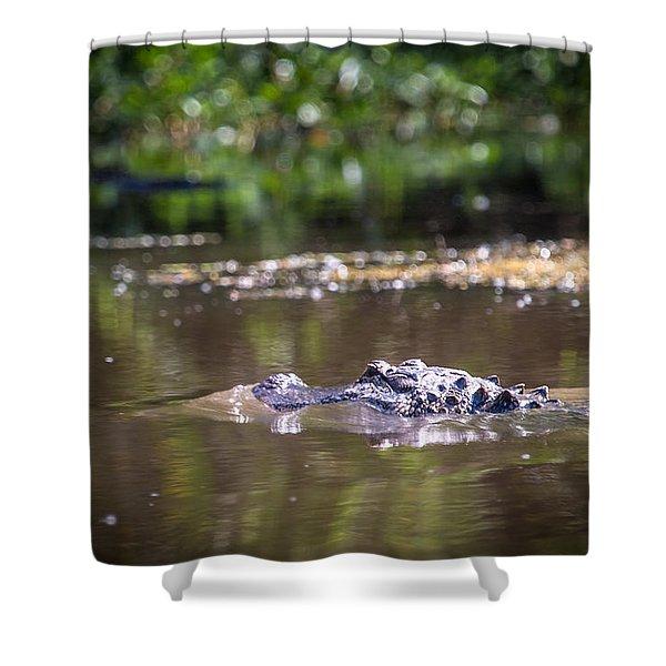 Alligator Swimming In Bayou 1 Shower Curtain
