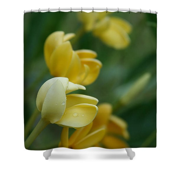 Aloha He Pua Lahaole Kula Gardenia Grandiflora Shower Curtain