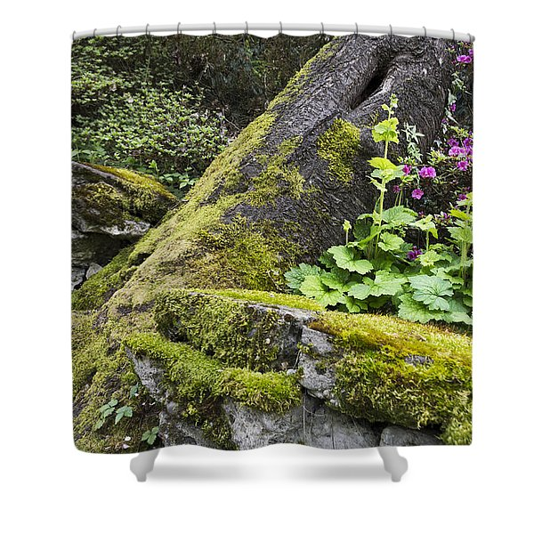 Along The Pathway Shower Curtain